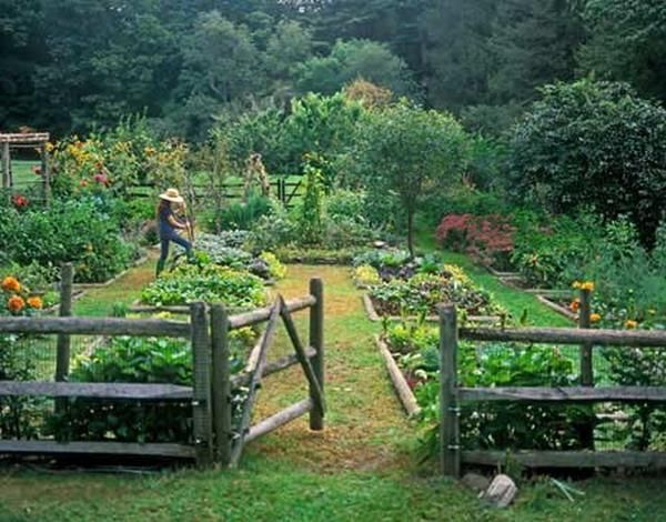 Ordinaire Vegetable Garden Design With Wooden Fence