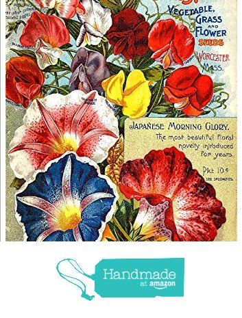 Pin by Susan Martin on Morning glory memories | Seed catalogs