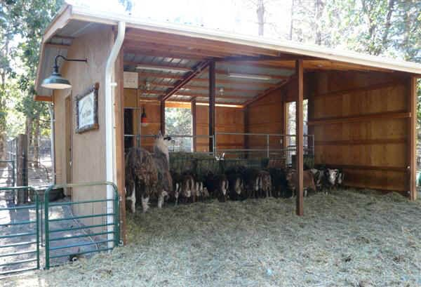 Sheep barn shed google search sheep barn pinterest for Small horse farm plans