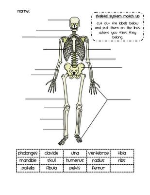 skeleton match up activity science pinterest skeletons activities and worksheets. Black Bedroom Furniture Sets. Home Design Ideas
