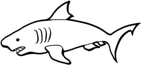 australian shark coloring page  free printable coloring