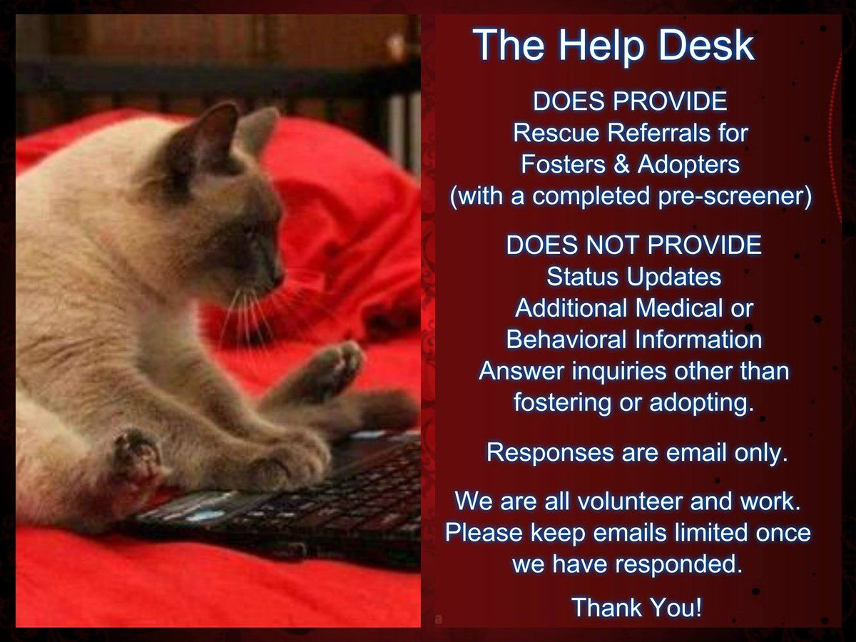 339 Twitter Cat Help New York Animals Cats