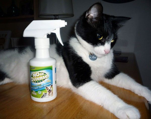 Nose Offense Is A Spray That Eliminates Cat Odors