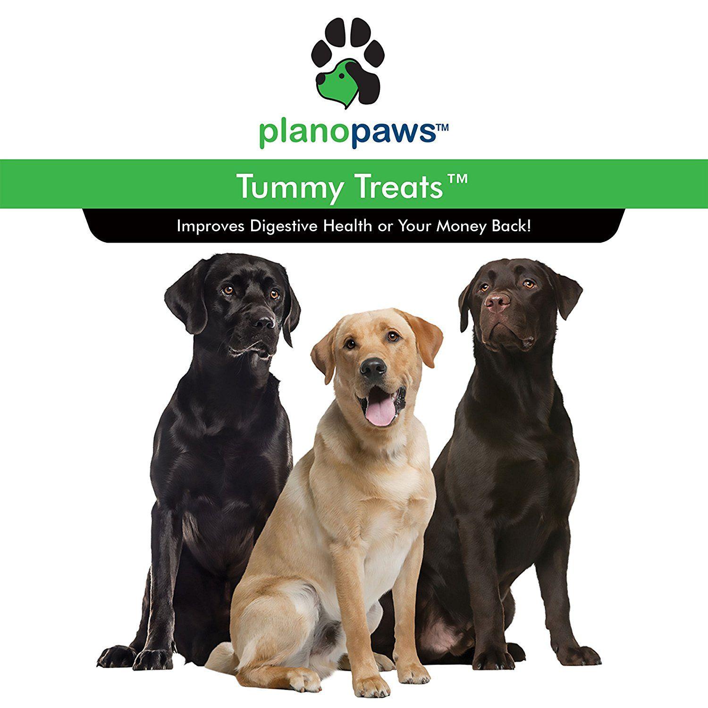 Pin on Dog supplies