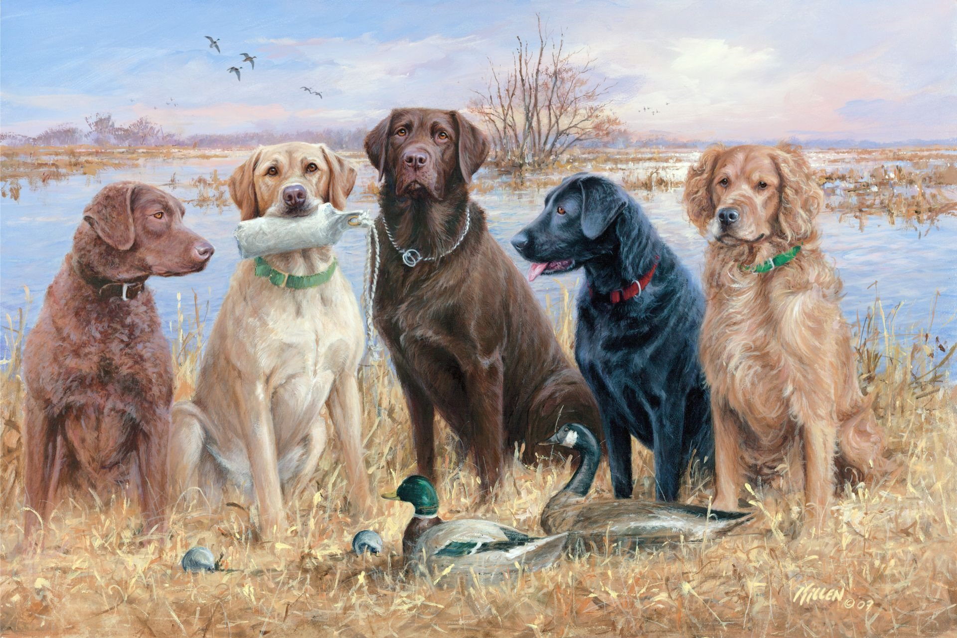 Duck Hunting Dogs Duck Hunting Desktop Wallpapers With Waterfowl