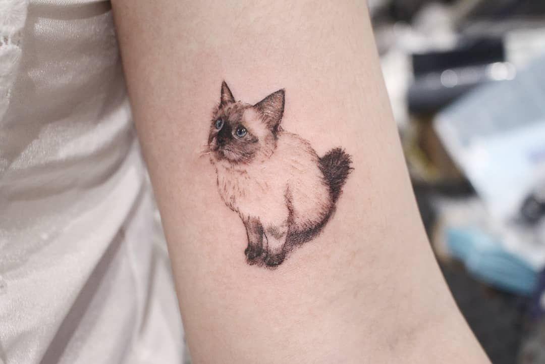 Image Result For Persian Cat Tattoo Cat Tattoo Small Cat Tattoo Designs Kitten Tattoo