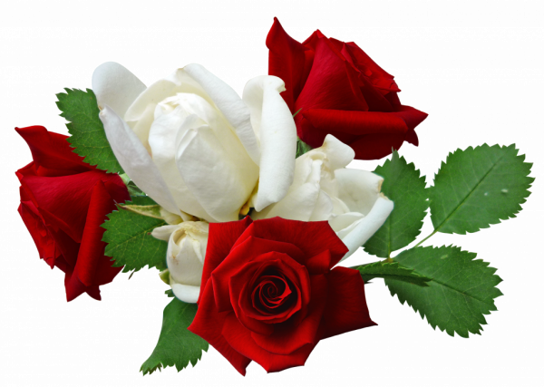 Oa Ga Kla A Ikova S Blog Page 41 Olinkin Blog Skyrock Com Beautiful Flowers Wallpapers Flower Images Rose
