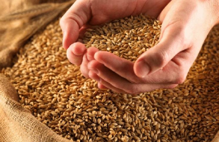 Физики и математики из Австралии нашли способ максимально плотно упаковывать зерна пшеницы, вытянутые капсулы лекарств или наночастицы, последовав тем самым притче о воздаянии из Библии, говорится в статье, опубликованной в журнале Nature Communications, сообщает 316NEWS со ссылкой на christian.by.