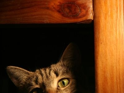 How To Get Rid Of The Cat Pee Smell From Air