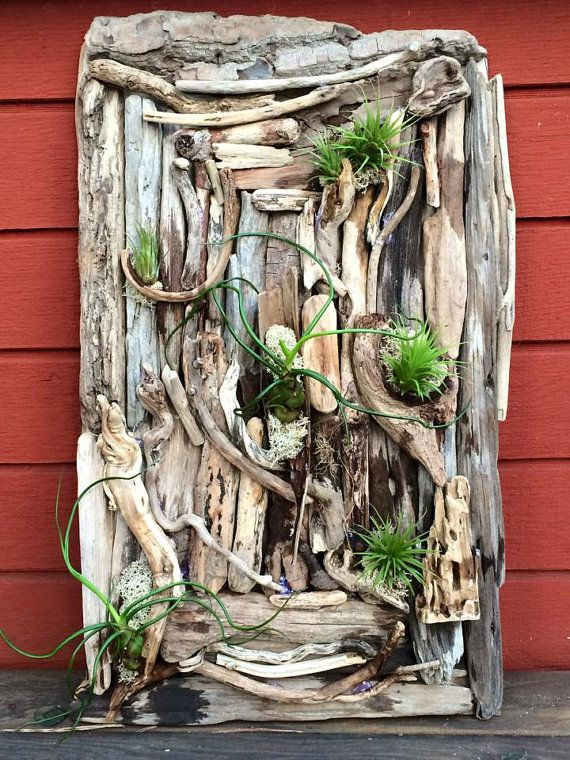 Driftwood Living Wall with Airplants - Fun addition and conversation piece in any home.