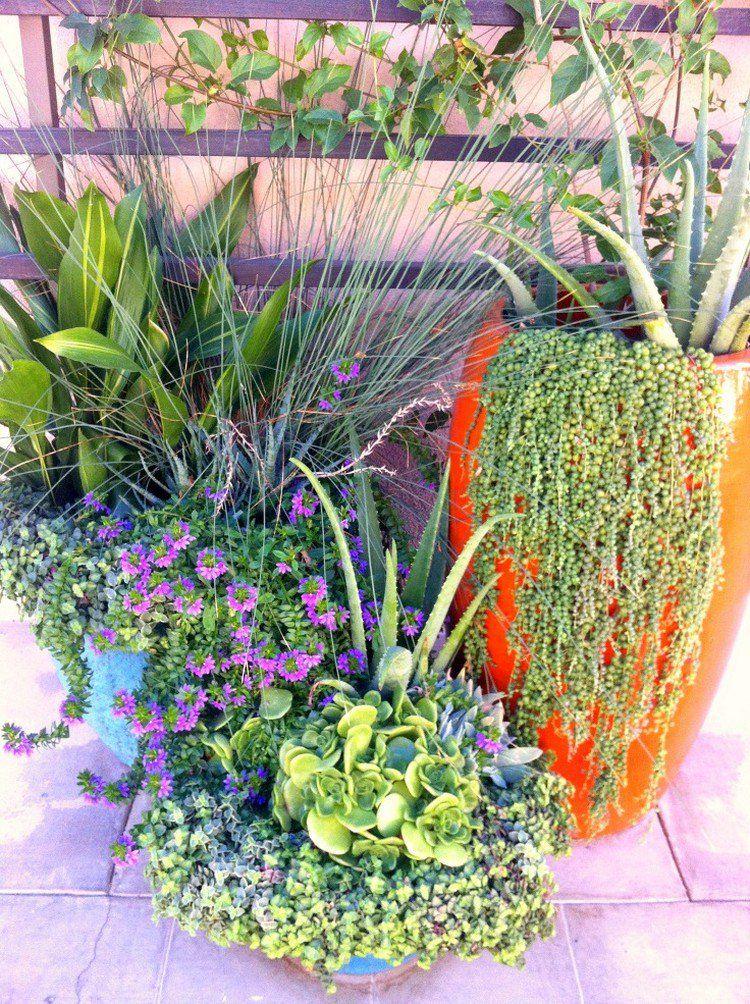 plantes vertes, fleurs en violet et Kleinia à groseilles pour épicer la déco