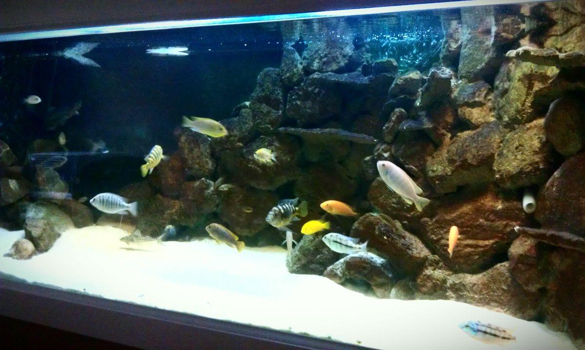 Diy 3d Aquarium Background Have A Blue And Black Background On