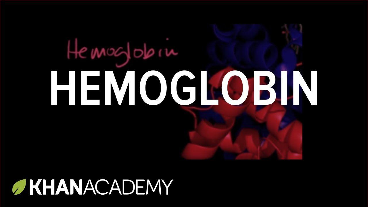 Hemoglobin (within RBC)