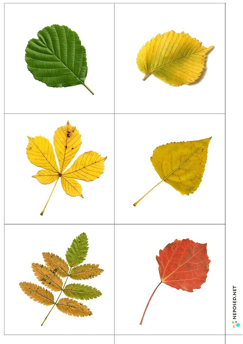 Значением имени, дидактическая игра с какого дерева листок в картинках