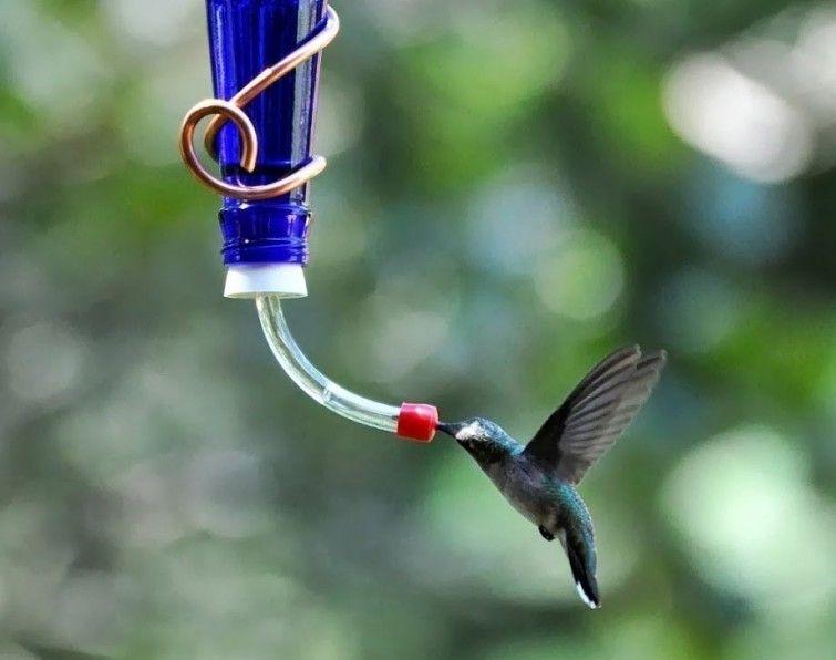 C mo hacer un bebedero para atraer colibr es a tu jard n - Como arreglar un jardin ...