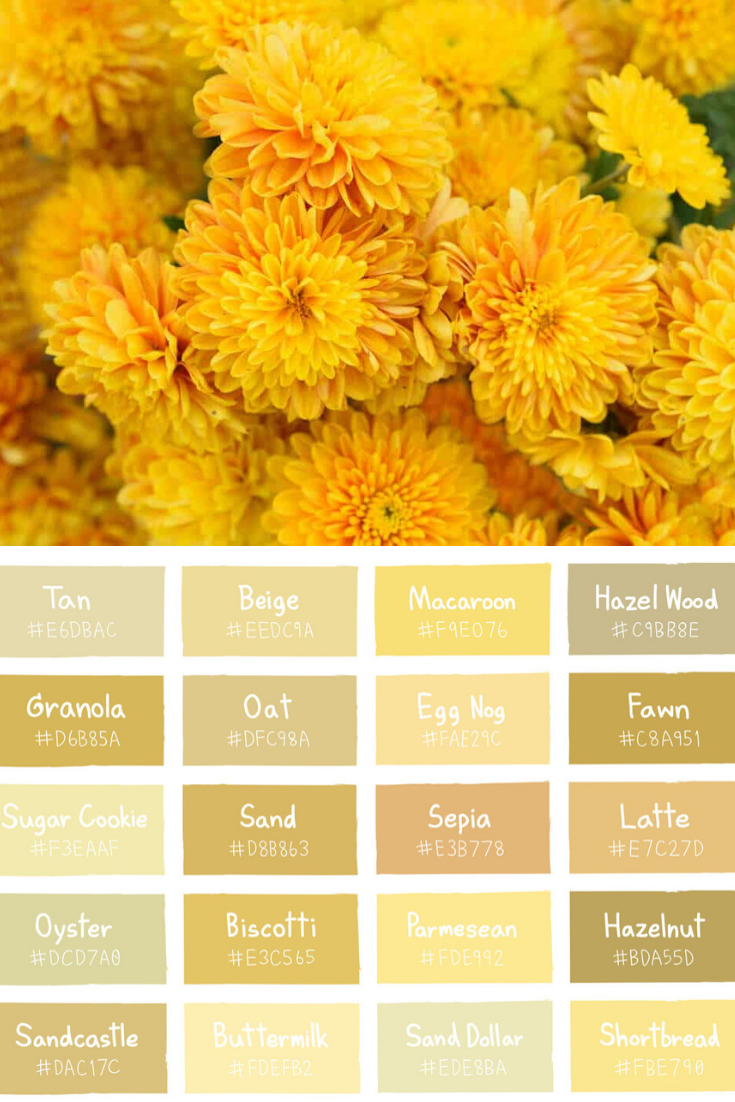 30 Types Of Yellow Flowers A To Z Photos And Info In 2020 Chrysanthemum Flower Flowers For You Yellow Chrysanthemum