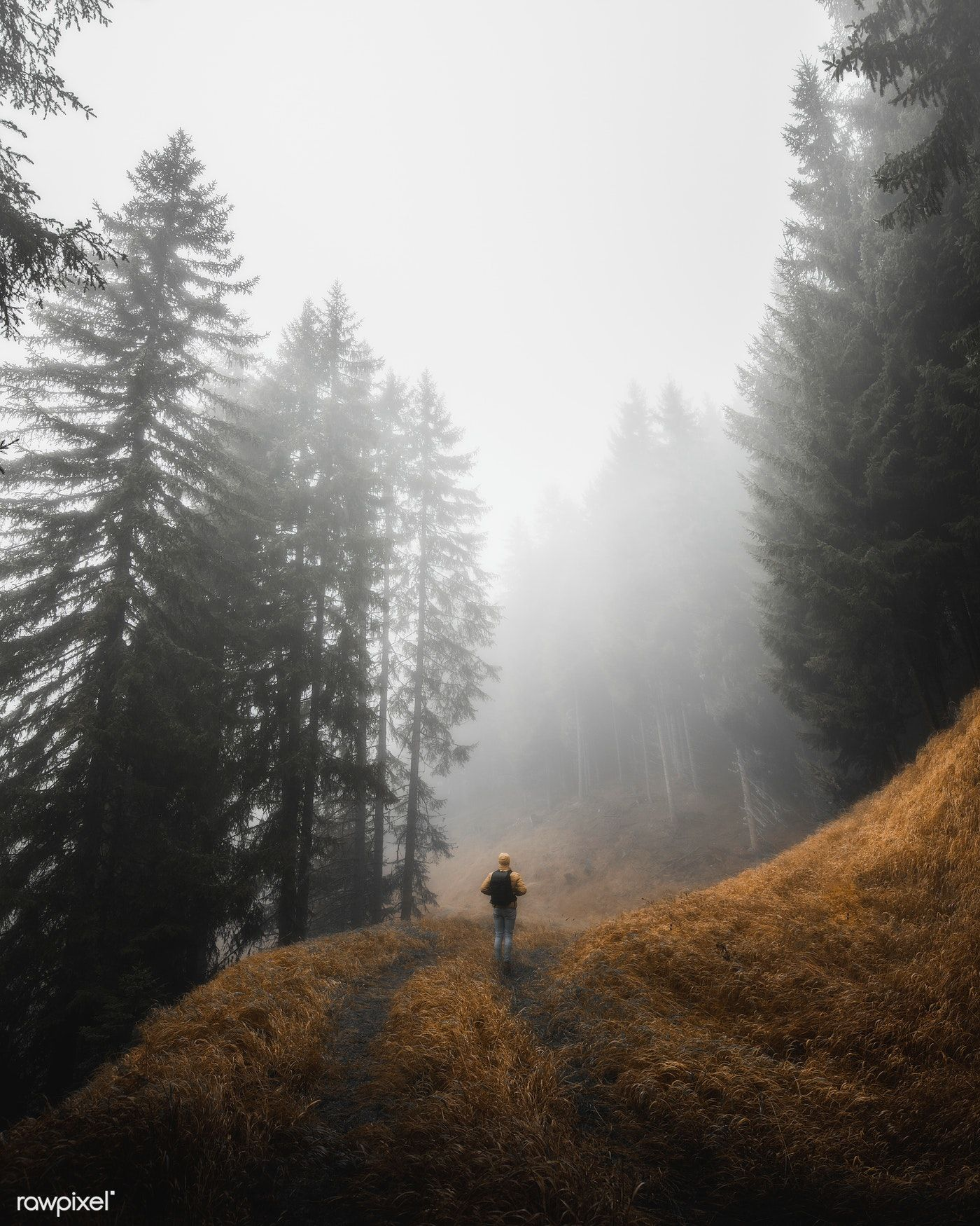 Download Premium Photo Of Man Walking In The Misty Woods In The