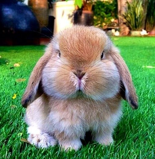cute rabbit with the