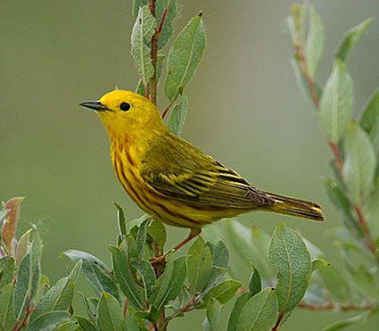 Pin On Bird 1