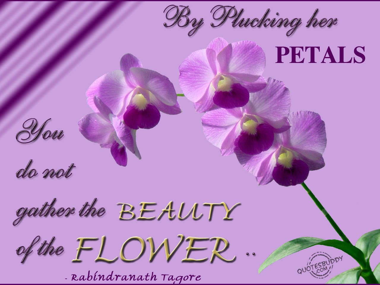 Orchids Enchanting And Inspiring Flower Quotes Flower Quotes Inspirational Beauty Quotes