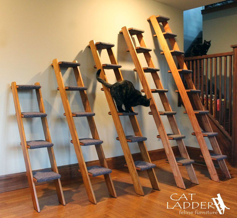 Cat Ladder Feline Furniture Selection Guide | Cat Ladder Feline .