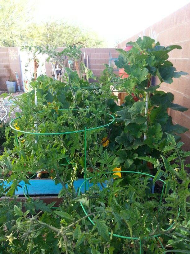 Las vegas garden 5/2015