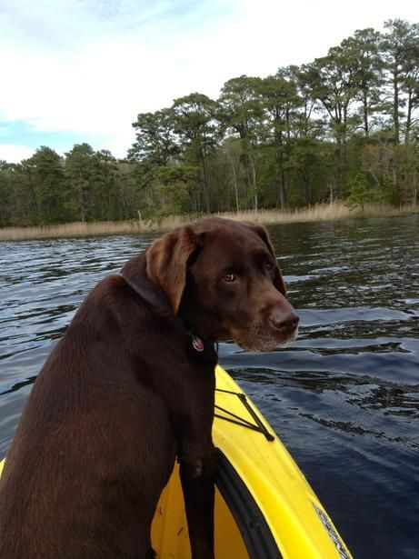 In Berlin, MD, dogpaddle with Fido in a kayak or canoe