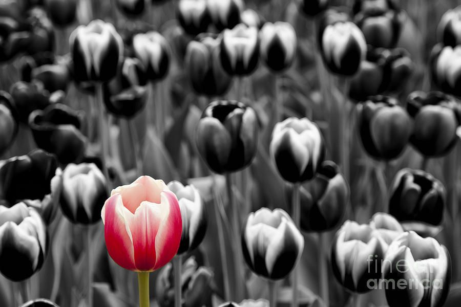 Stand Out In A Crowd