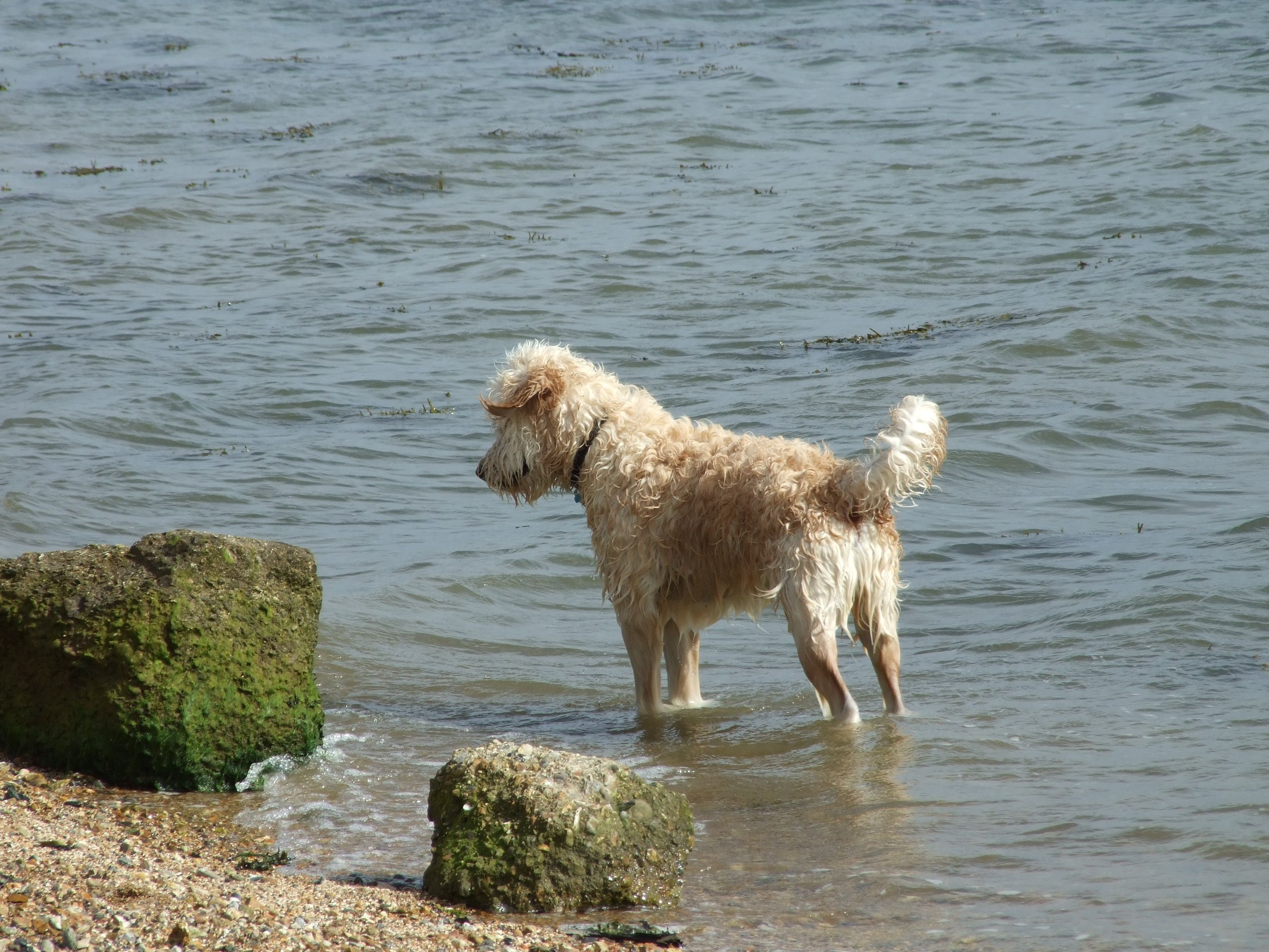 Toffee in the sea off Portsmouth.