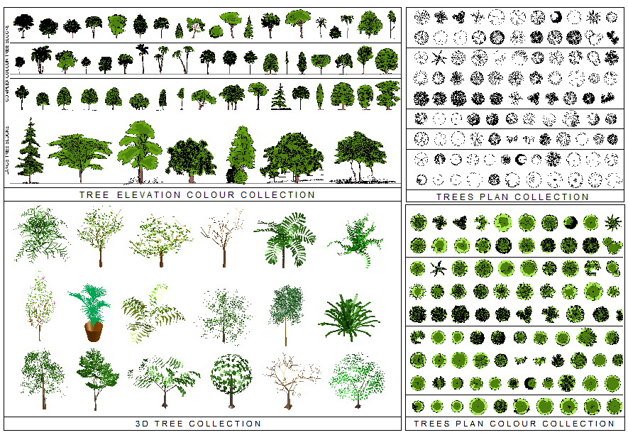 Tree Plan Png Free Download