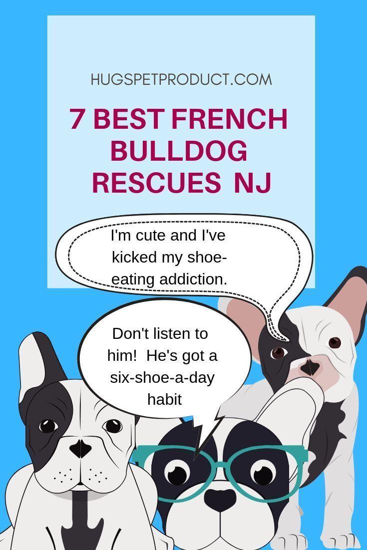 french bulldog puppies georgia rescue