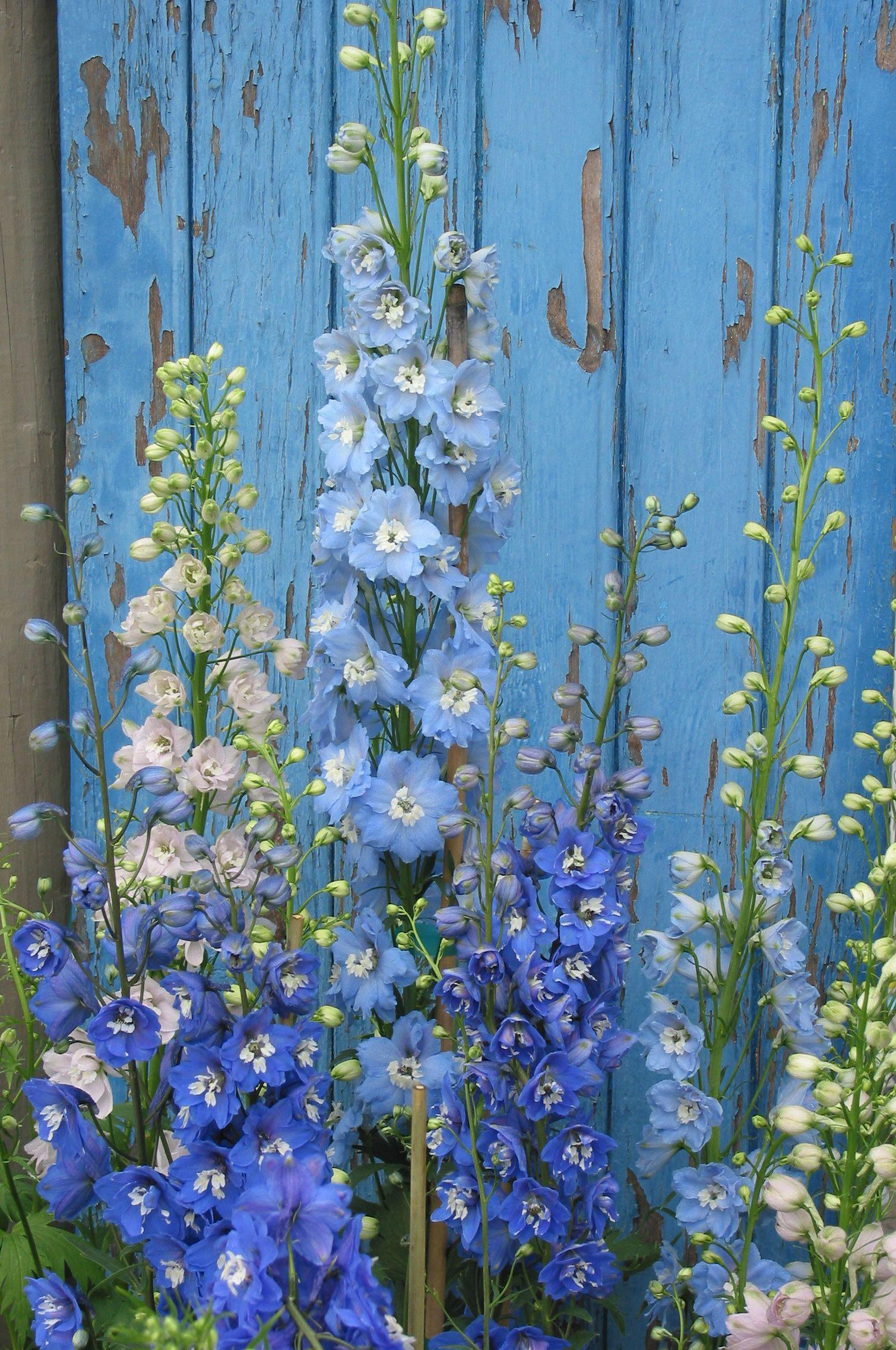 Pin On Perennial Favorites