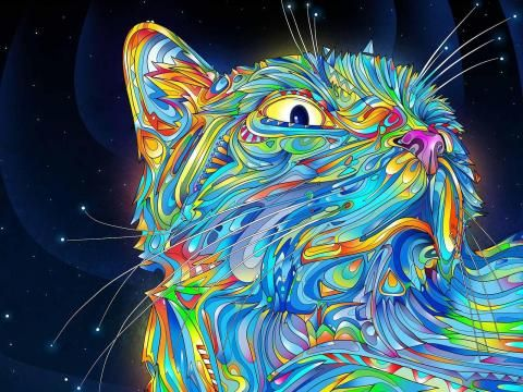 Amazing Cat Grafitti Trippy Wallpaper Trippy Cat
