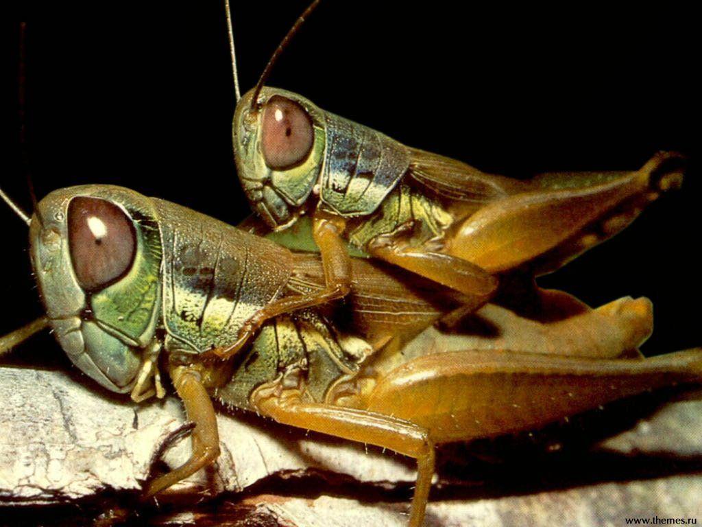 Grasshoppers | Salton | Pinterest | Animales