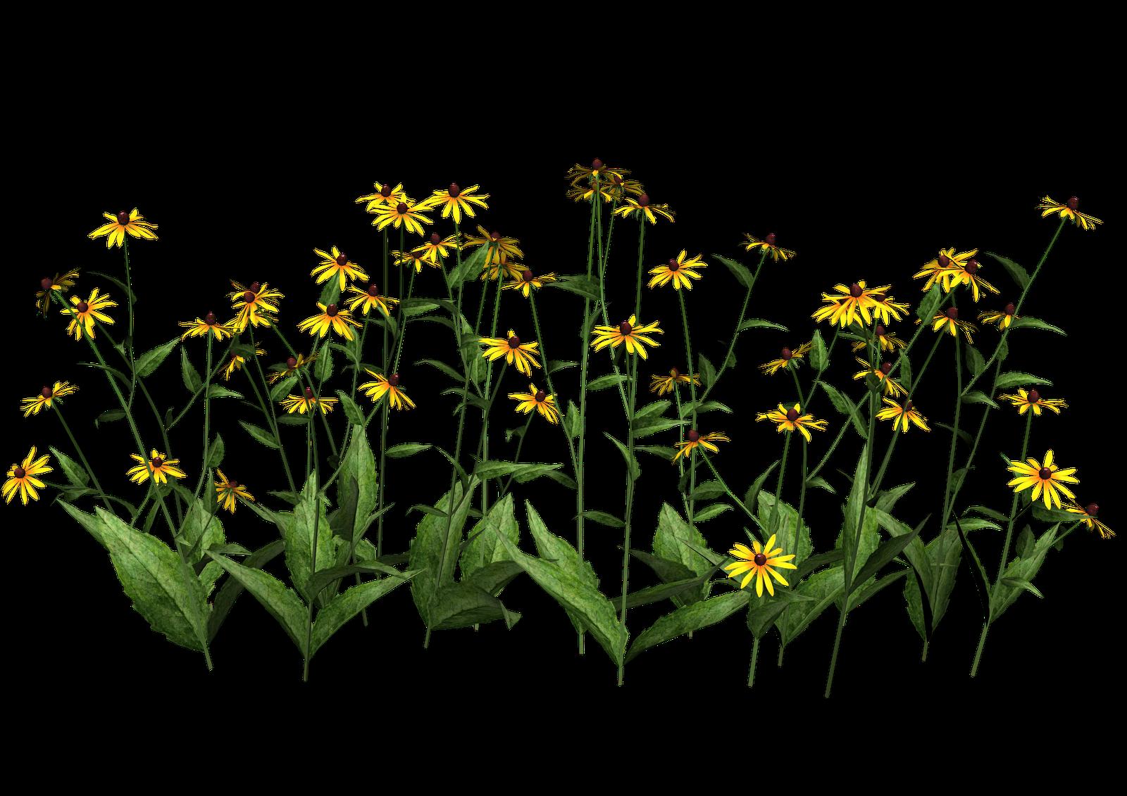 misc plant png Plant images, Plants, Flower pots