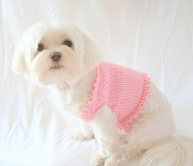Picot Dog Sweater pattern by Brandie Knaggs   Puppy coats, sweaters ...