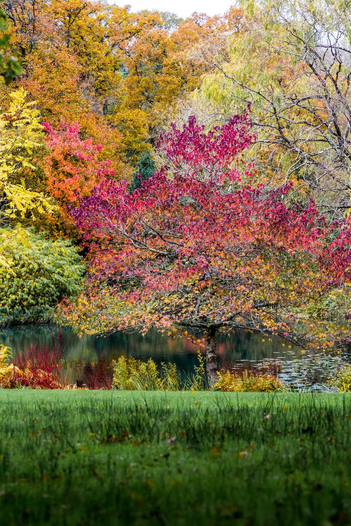 Autumn at Wisley