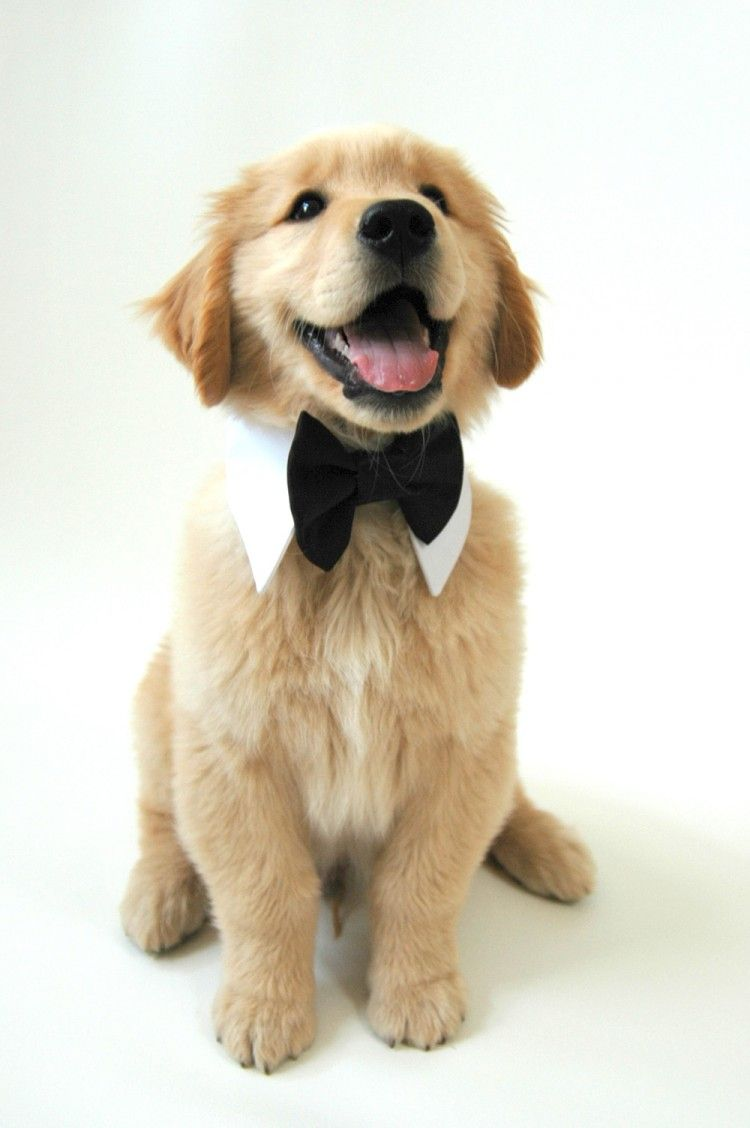 Let your bestfriend be part of your special day! http://www.designerdudsfordogs.com :-)