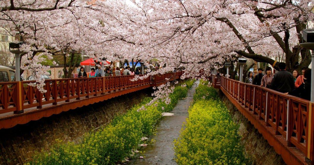 Wallpaper Pemandangan Di Jepang Wallpaper Pemandangan Wallpaper Pemandangan Di Jepanghttp Pemandanganoce Blogspot Com 2017 0 Pemandangan Wisata Jepang Jepang