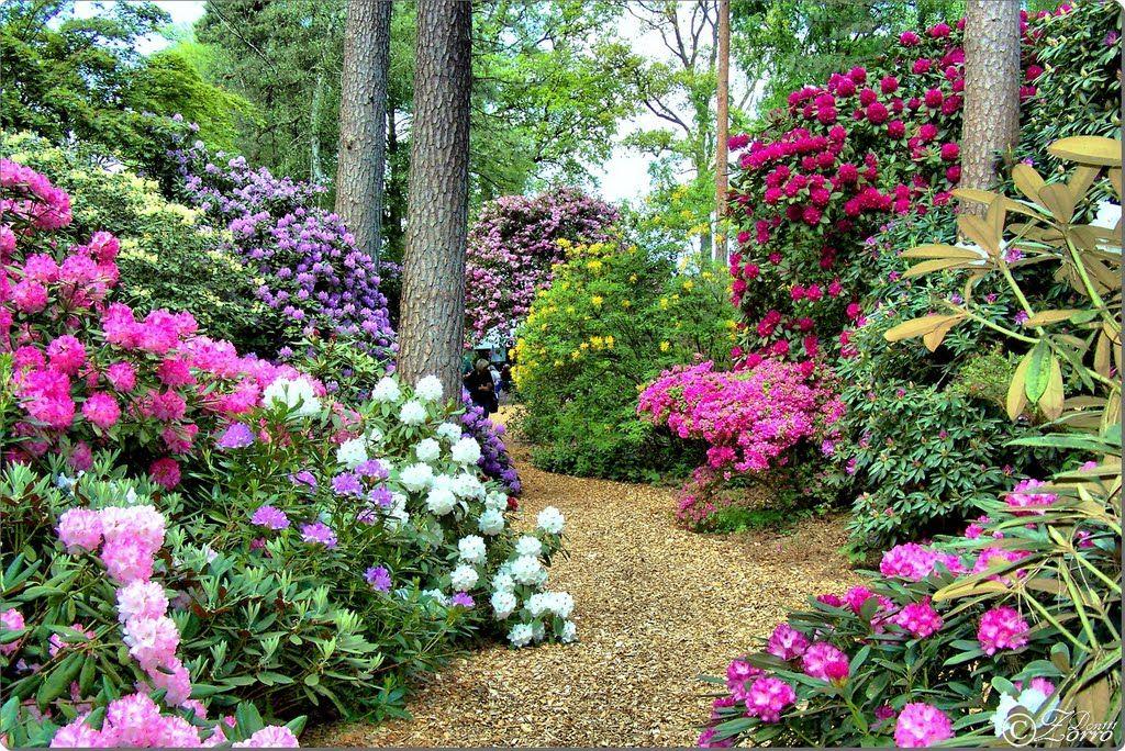 Hobbie Rhododendron Parc Westerstede Germany Garten Ideen Garten Wunderschon
