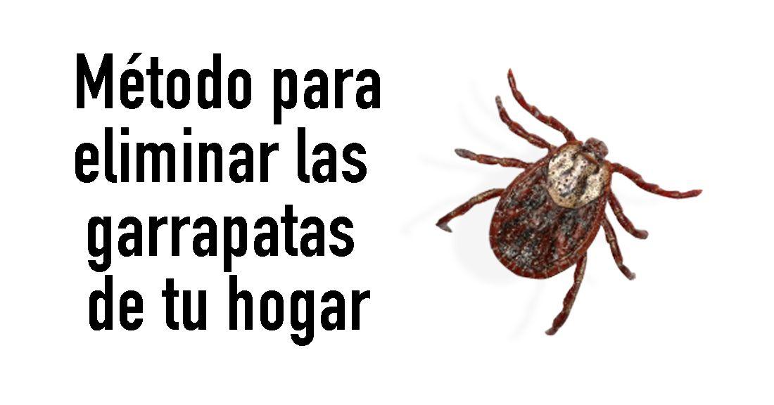 Los Insectos Insisten En Convivir Con Nosotros Aún Cuando Recurrimos A Todo Tipo De Insecticida Y Repelente Para Alejarlos De Nuestras Familias Youtube Insects