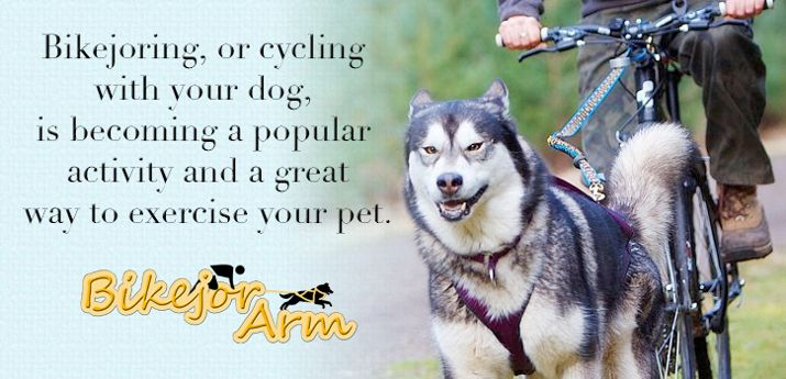 Bikejoring Dog Activities Dog Sledding Dog Equipment