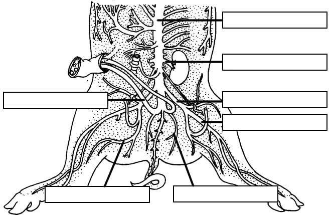 Pig Dissection | Pig dissection, Dissection, Pig