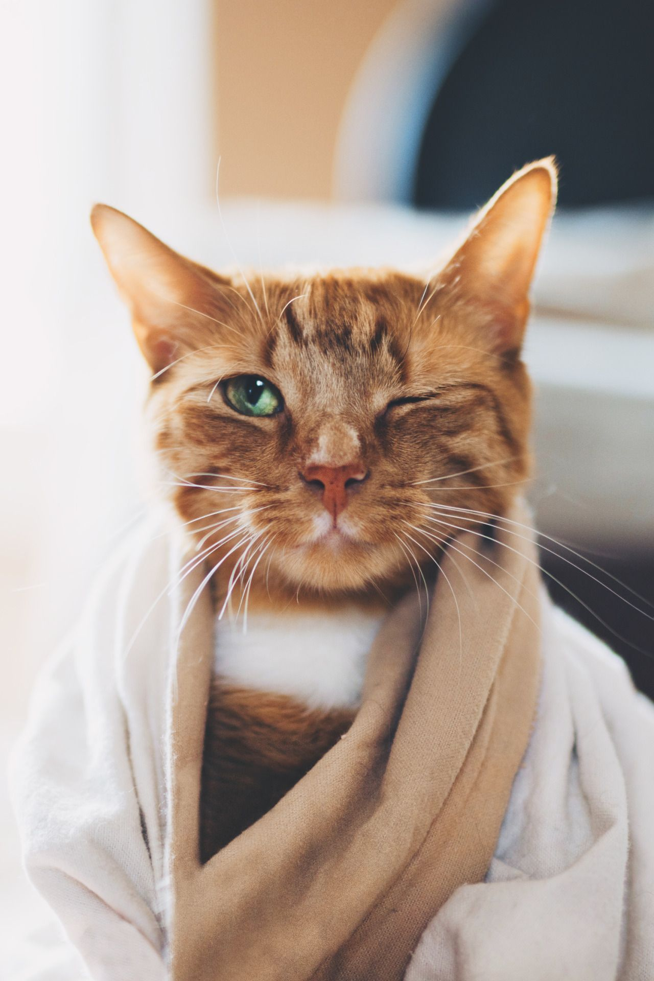 Alluring Coole Haustiere Photo Of Pin Von Juan Eduardo Fuentes Auf Cats