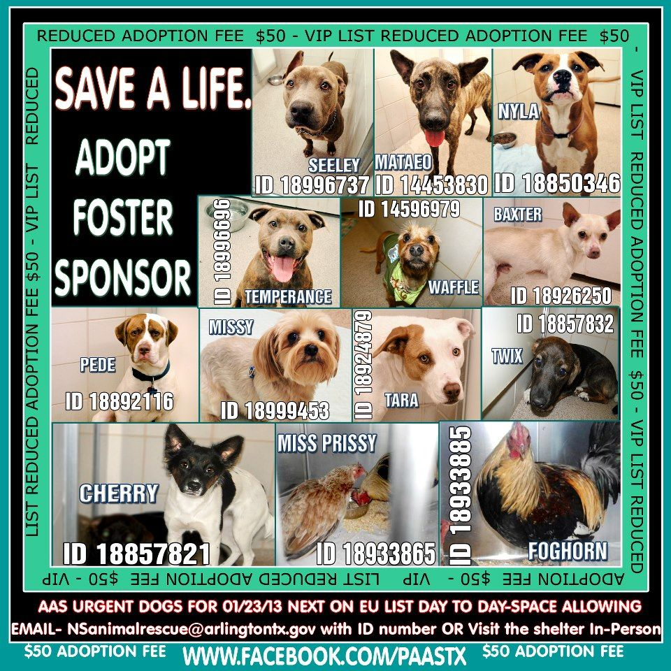 Very Urgent Kill Today Shelter Full Volunteers Are Best At Irving Animal Shelter Texas If You Liv With Images Puppies And Kitties Dog Adoption I Love Dogs