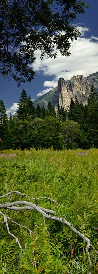 Sentinal Rock from El Cap Meadow, Yosemite - California