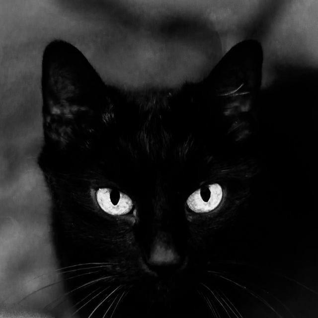 By Alicja Brodowicz I Luv U Kola In 2020 Cute Animals Warrior Cats Animals