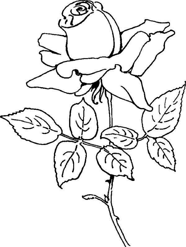 Blooming Rose Coloring Page Download Print Online Coloring Pages For Free Color Nimbus In 2020 Rose Coloring Pages Online Coloring Pages Coloring Pages