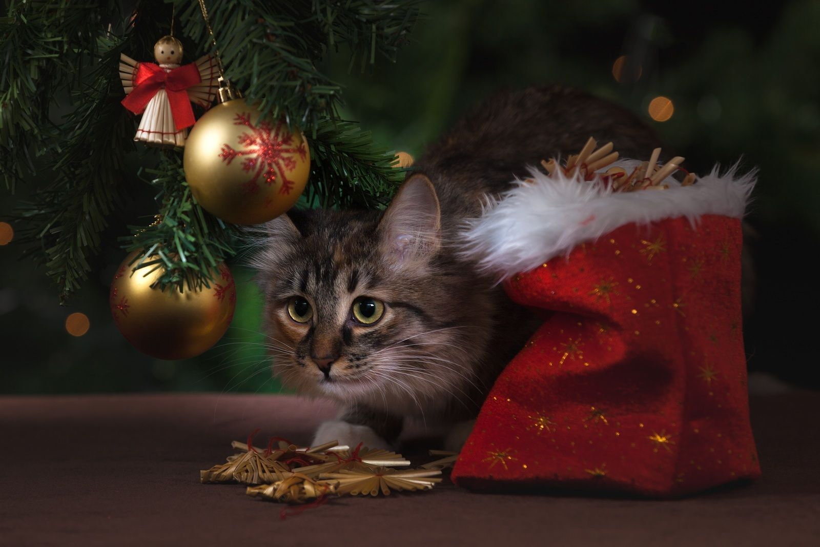 Holiday Decorations Hidden Dangers PetPlace Cat Breeds and Info