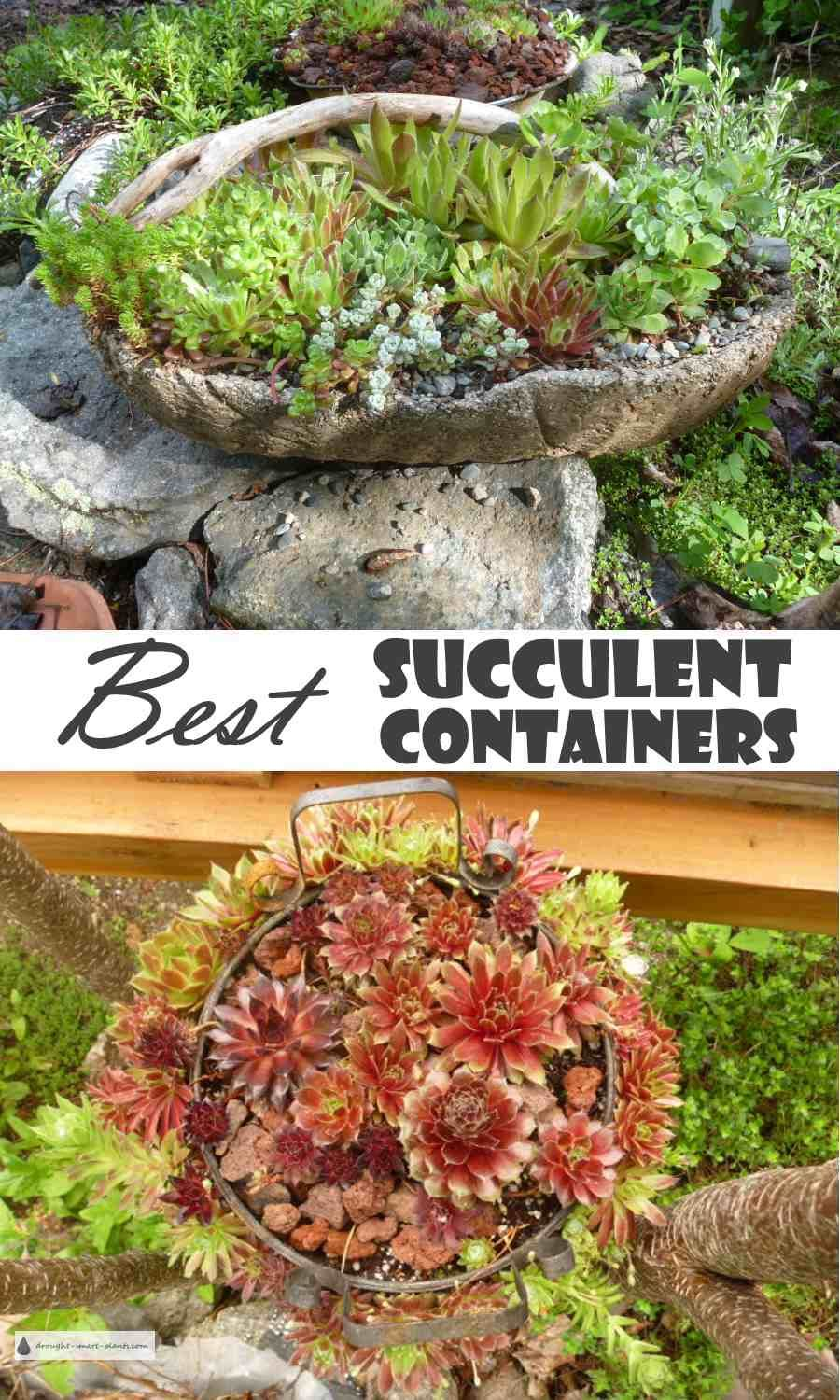 Best Succulent Containers Patio Planters Deck Pots With